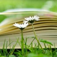 El verano es lectura: libros leídos y libros pendientes